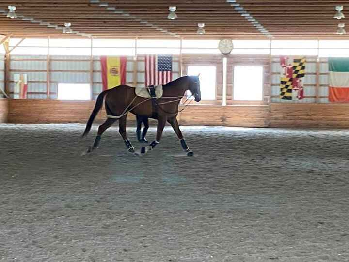 Photos from Cool Breeze Dressage's post